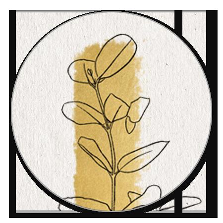 Papier, gouden streep en outline plantje